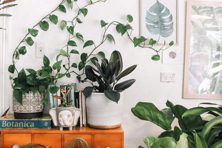 Add plants to your apartment at The Edmund to brighten up the space.